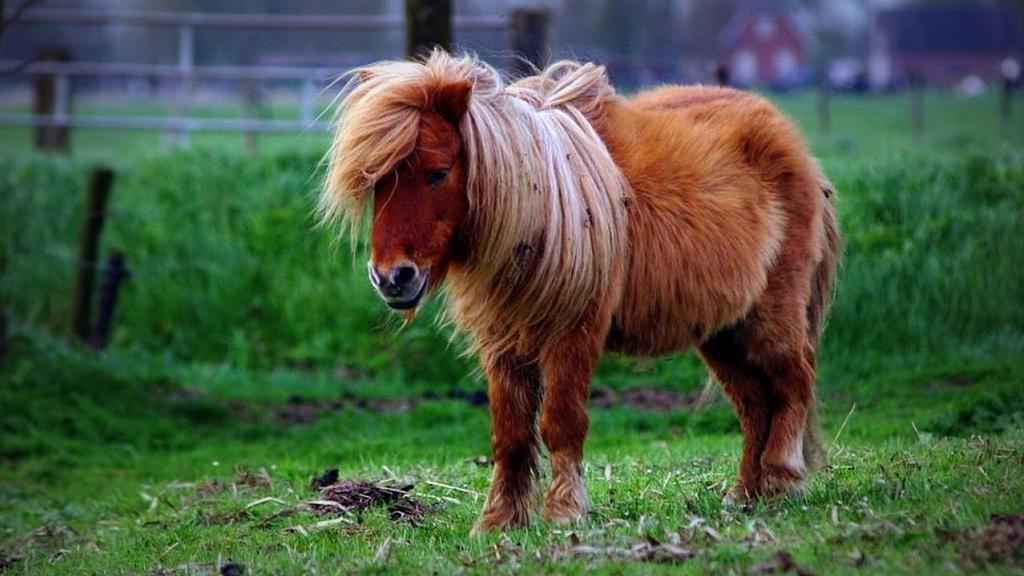 Berazategui, un empleado de zoonosis fue detectado por las cámaras violando a una pony